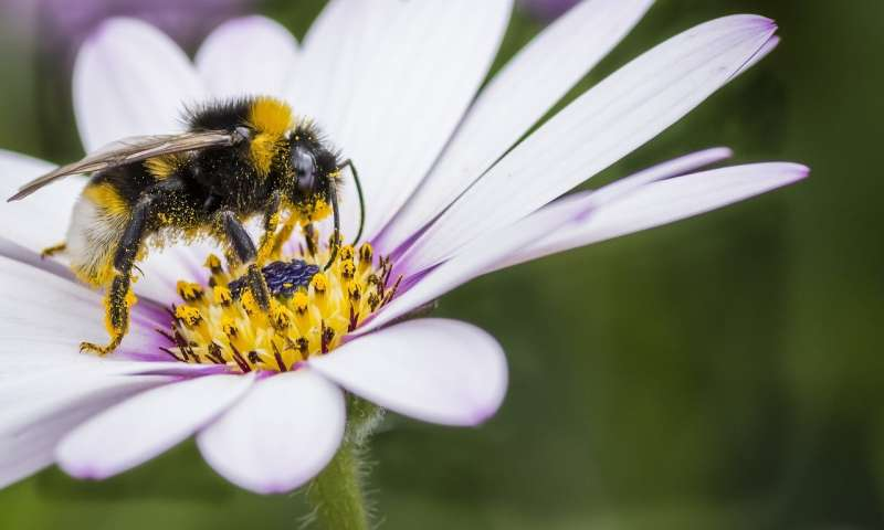 Studying bumblebees to learn more about human intelligence and memory
