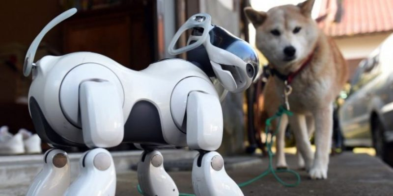 Robotic Dogs to Replace Sniffer Dogs at Indian Airports