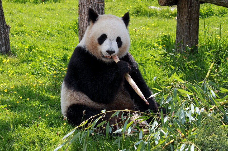 3 simple ways to handle large data with Pandas