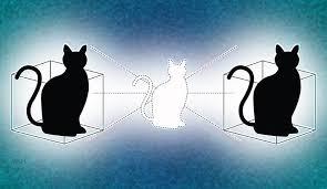 Artificial Intelligence and Schrödinger's cat