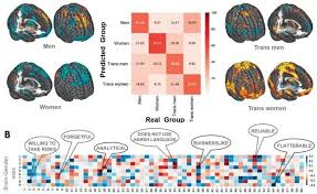 Machine learning study: At least nine gender expressions exist in the brain