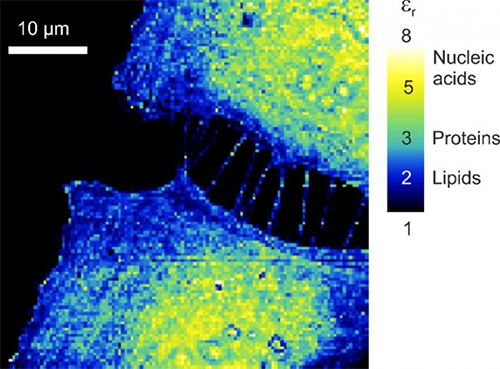 Machine learning reduces microscope data processing time from months to just seconds
